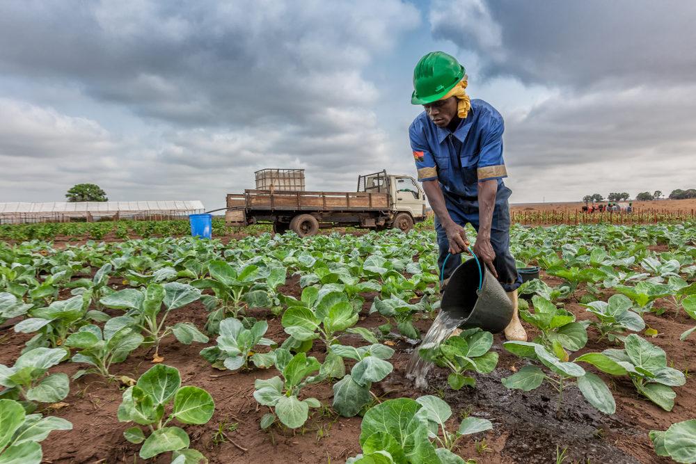 Produção Alimentar: Uma Questão de Soberania Nacional